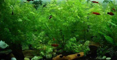 plantas artificiales acuario