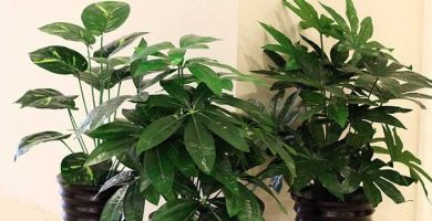 plantas artificiales de latex