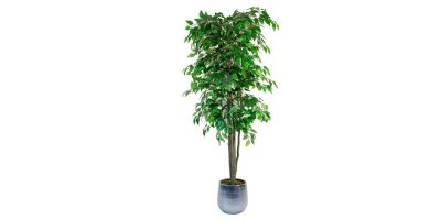Comprar ficus artificiales en amazon